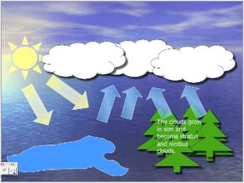 The Water Cycle by Gio