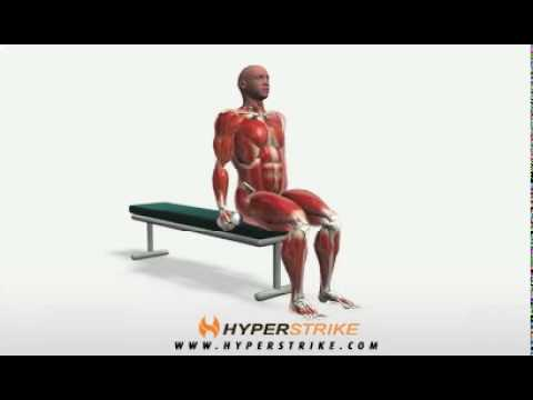 Exercise Videos- Alternating Hammer Curl -- Seated