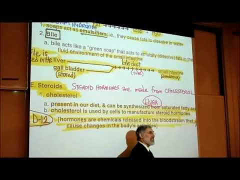 PHYSIOLOGY; CHOLESTEROL &amp; STEROID HORMONES by Professor Fink