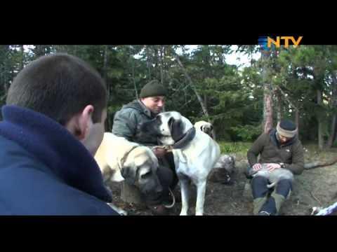 Doğada Tek Başına - Dağ Evi 2 Bölüm (15 02 2012)