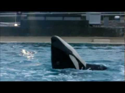 Dine with Shamu ~ Kalia Front Flip and Hula