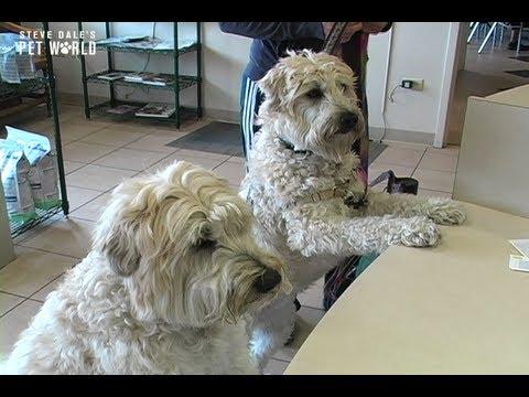 Thumbnail image for 'Steve Dale: Regular Veterinary Checkups'