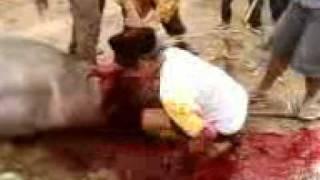 Mandi darah.3gp view on youtube.com tube online.
