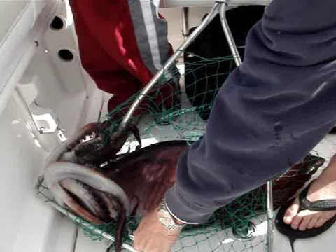 Giant Squid Fishing in San Diego Daylight