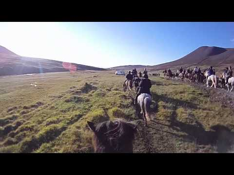Rounding up horses in Laxa&#769;rdalur valley, North West Iceland