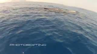 <B>Avvistamento capodoglio fuori dal golfo di Palermo</B>