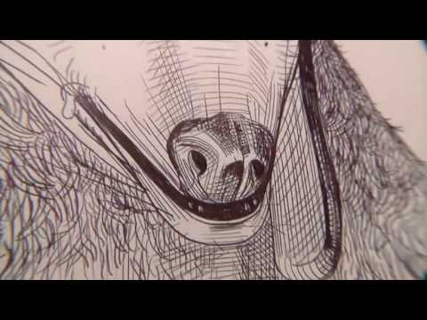 Teriomorfo: Karin Andersen, Robert Gligorov, Daniel Lee