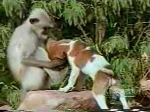 monkey vs. dog