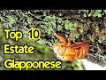 TOP 10 ESTATE GIAPPONESE! - Vivi Giappone