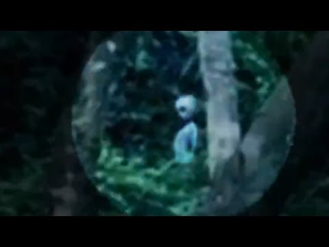 The Super Amazing Project - Alien spotted in Brazil rainforest!