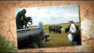 #337 white buffalo naming
