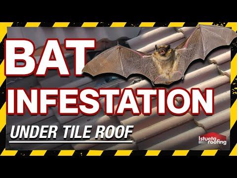 {WTF} Bats living in roof of house!