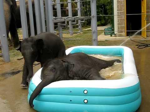 """Hoćemo njih u bazenu u kući """"Velikog Brata"""""""