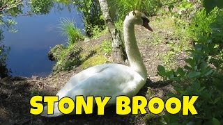 Great day at Mass Audubon Stony Brook ~ Swans ~ Geese ~ Ducks~ Turtles and a Frog