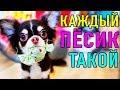 КАЖДЫЙ ПЕСИК ТАКОЙ   ПАРОДИЯ Magic Pets