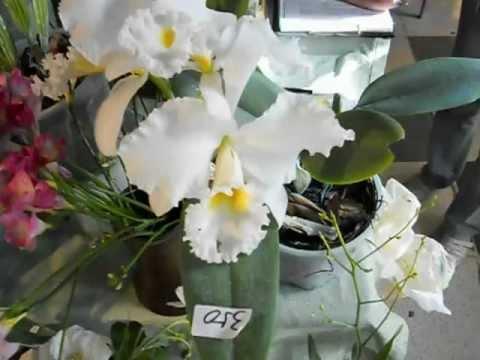 Orquídeas en APCOA V