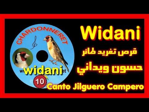 cd chant de chardonneret (widani)
