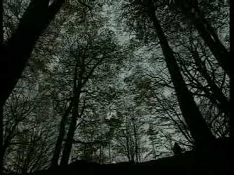 La Foresta Sacra (1 parte)