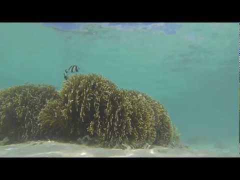 Les étoiles... du lagon du Morne - Mauritius