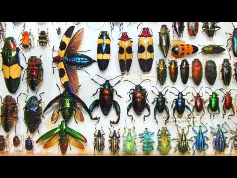 Jewels of the Insect World - Amazing Tropical Beetles 720p HD