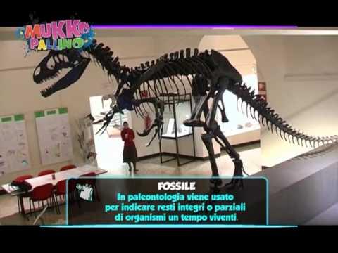 Zoologia, geologia, paleontologia: tutto in un museo... a Bergamo!