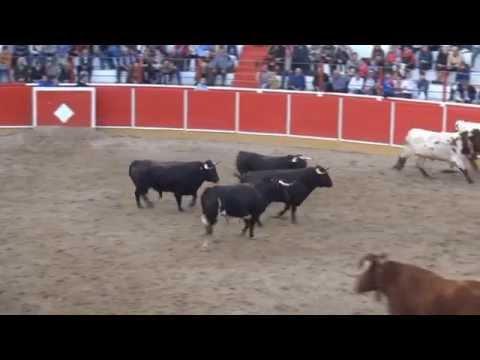 DESEMBARQUE TOROS CORRIDA DIA 14 DE MARZO EN FITERO NAVARRA