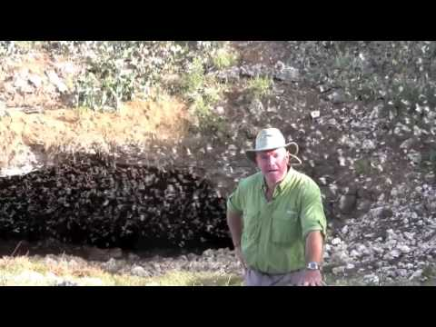 Bracken Bat Cave Emergence