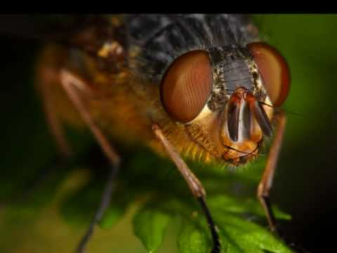 Canon Macro Photography compilation. Flies / Diptera insects