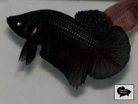 BETTA PLAKAT MEDIA LUNA NEGRO.wmv