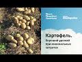 Фрагмент с начала видео Картофель. Хороший урожай при минимальных затратах