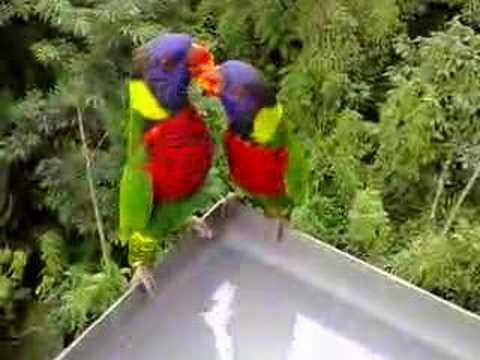 Lory Park (Singapore Jurong Bird Park)