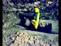 Фрагмент с конца видео Вентиляция погреба через крышу.