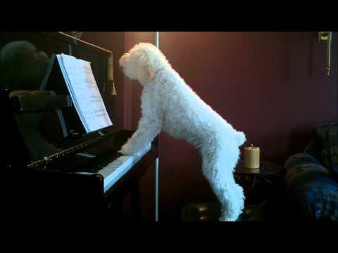 Tucker piano Dec 7-2010.wmv