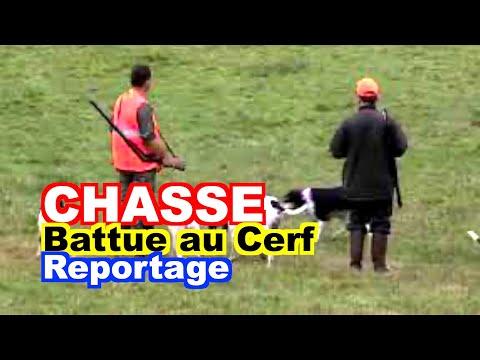 CHASSE : Battue au Cerf en Aubrac