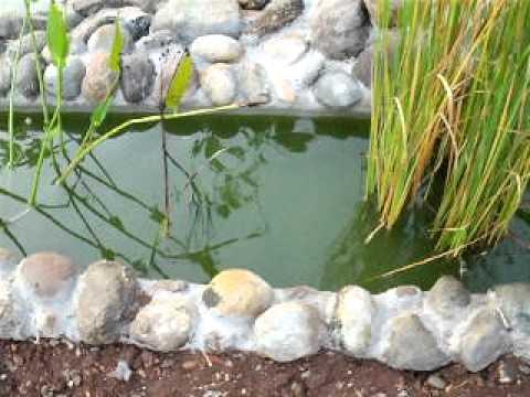 zona fitodepurante con cascatella nel mio laghetto