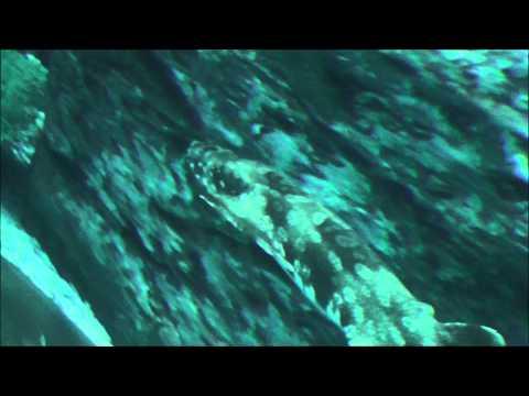 Dubai Aquarium [1080p]