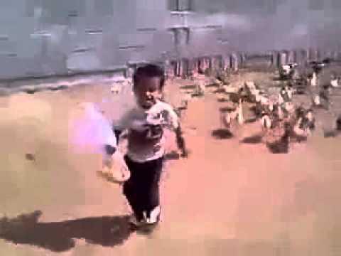 Em bé bị đàn gà truy đuổi cực hot