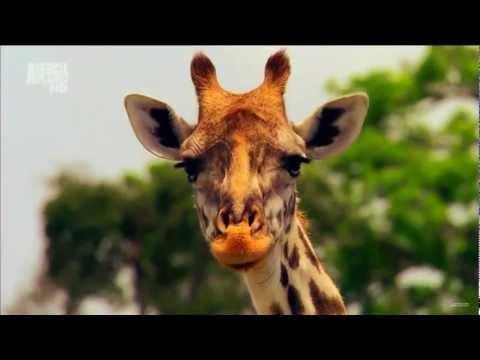 Animal Planet HD Advert 2012 1080p