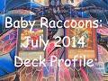 Yugioh July 2014 Baby Raccoon Deck Profile!