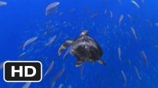 Turtle: The Incredible Journey Movie (2011) Trailer HD