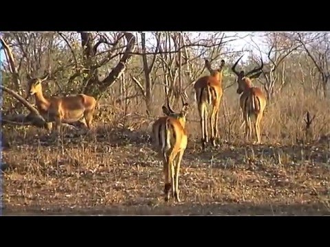 African Wildlife HD Part 1 - South Africa Travel Channel 24
