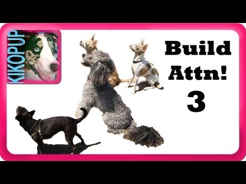 Building attention 3- Clicker Dog Training