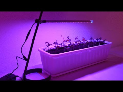 Лампа для рассады в домашних условиях 668