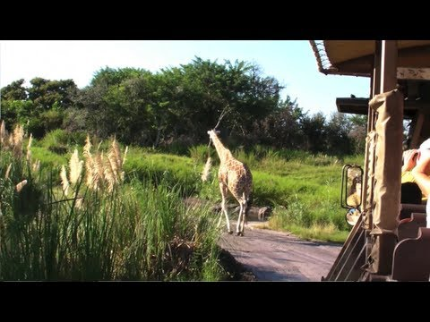 Kilimanjaro Safari at Disney's Animal Kingdom - Full HD