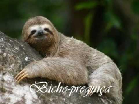 Animais do Pantanal!