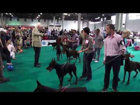 WORLD DOG SHOW 2013 - DOBERMANN FINALS poster