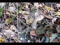 Хутор в лесу - плюсы и минусы