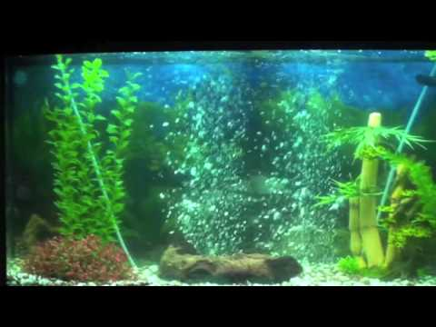 MY NEW FRESHWATER TROPICAL AQUARIUM - JUWEL VISION 180