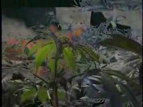 Twiztid - Hydro (Marijuana)