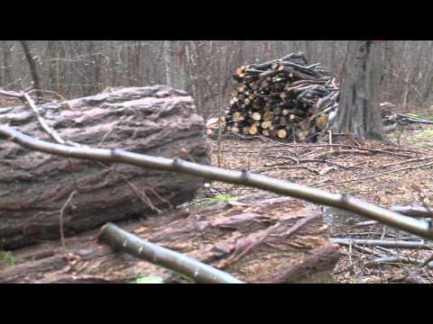 anteprima foreste